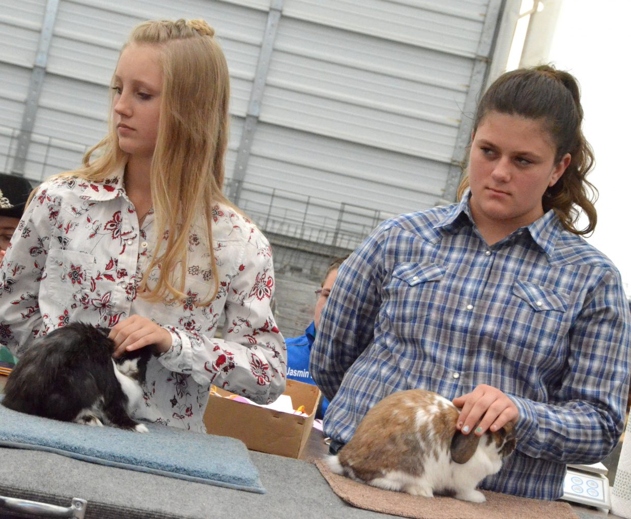 Haley Boatman, left, and Alyssa Duncan get their animals ready for the rabbit show Friday at the Moffat County Fair.