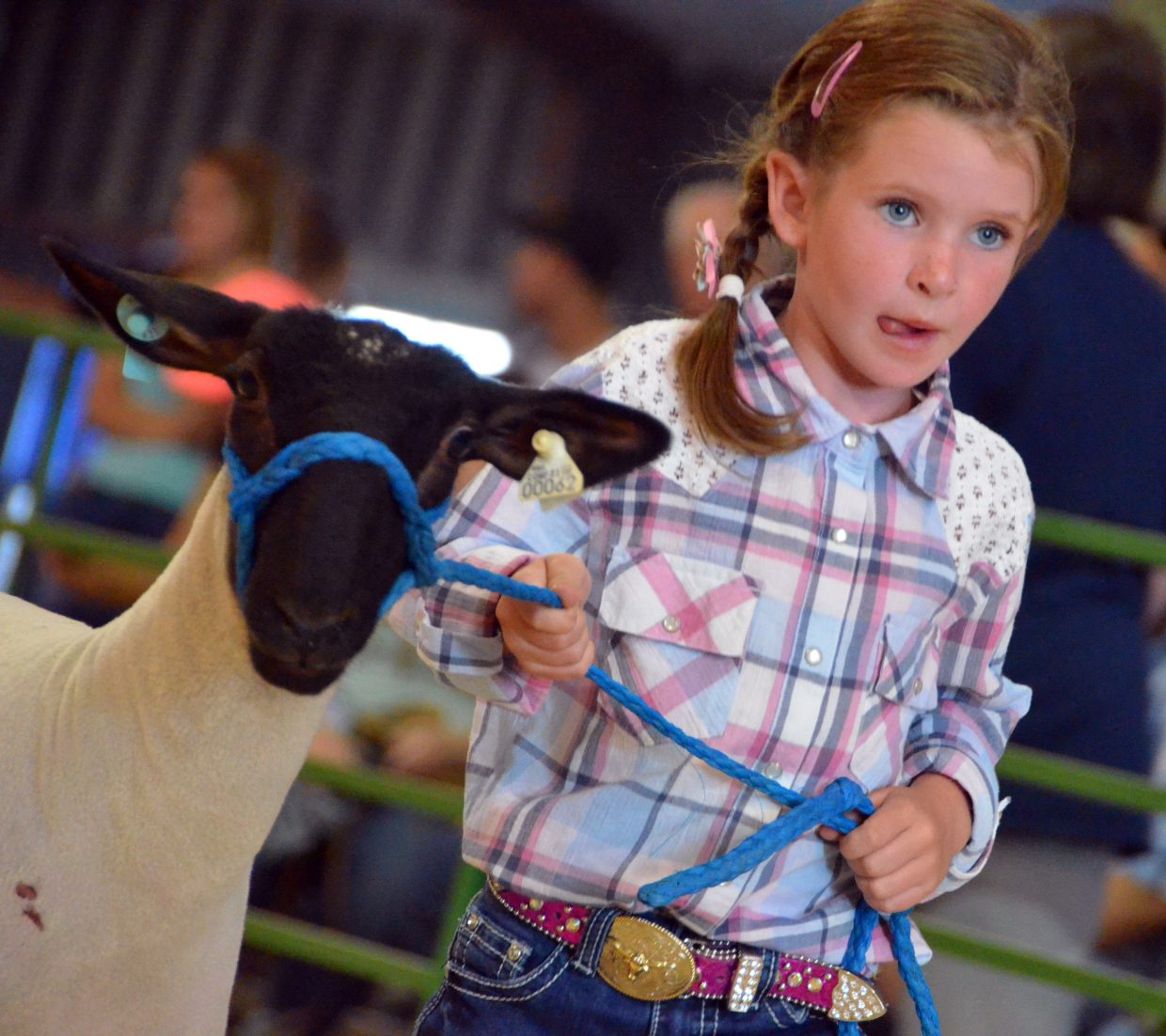 Cadie Hume leads her sheep during the pee-wee division of the Wednesday sheep show at the Moffat County Fair.