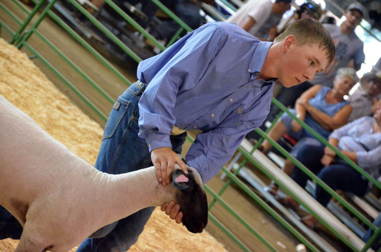 Pepper Rhyne leads his animal around the ring during the market class division of the Wednesday sheep show at the Moffat County Fair.