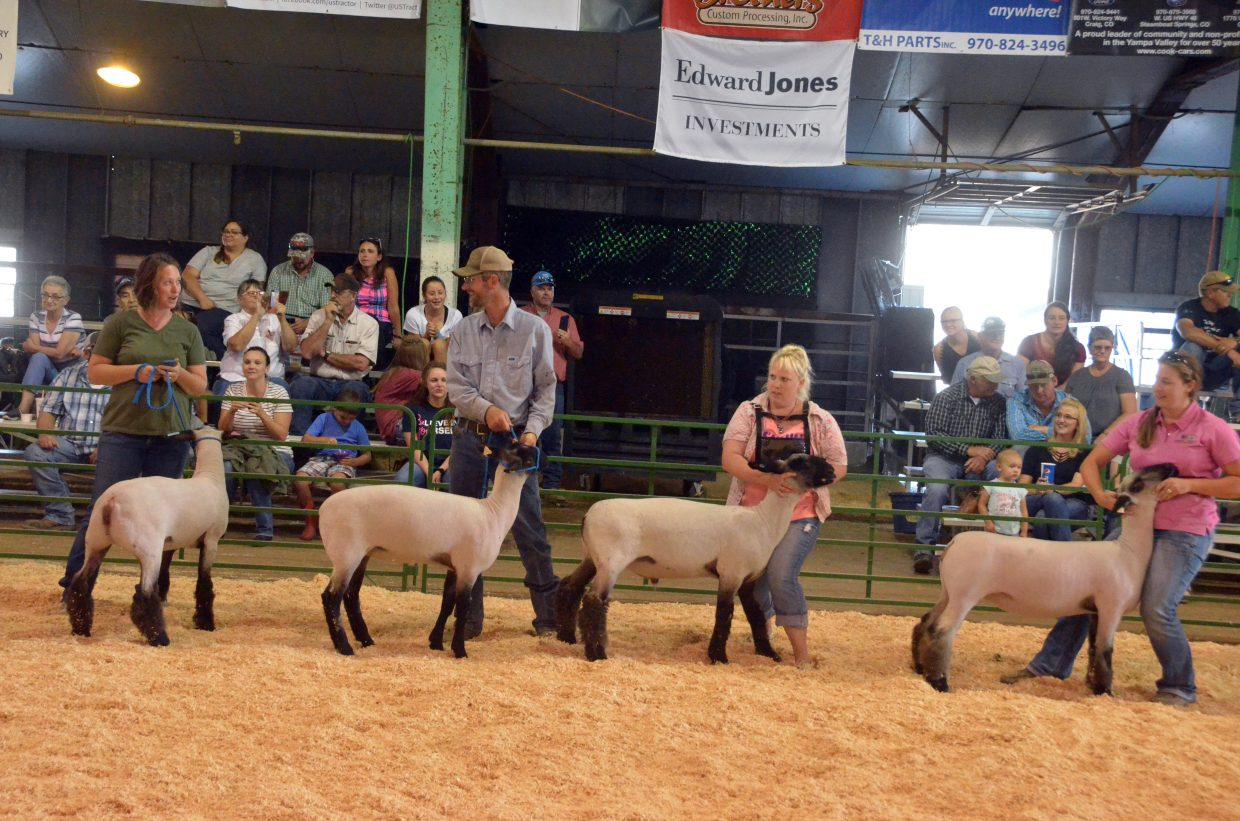 Presenters in the Old Geezer Sheep Show demonstrate their prowess during the Moffat County Fair.