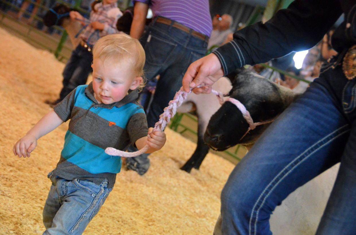 Chasen Lyons grabs hold of the rope of his sheep during the pee-wee division of the Wednesday sheep show at the Moffat County Fair.