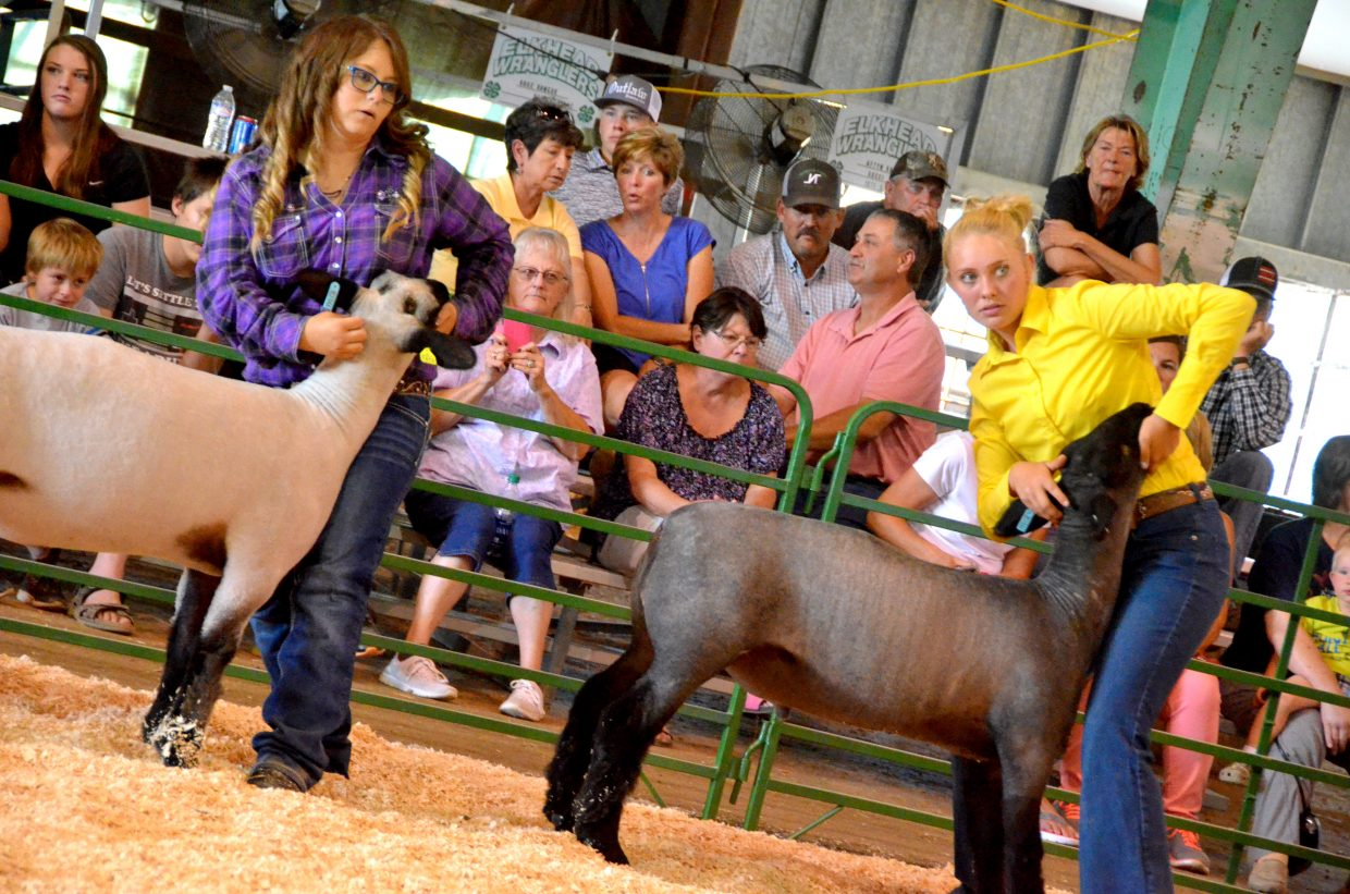 Sydnie Harding, left, and Trinity Boulger position their animals  for judging during the market class division of the Wednesday sheep show at the Moffat County Fair.