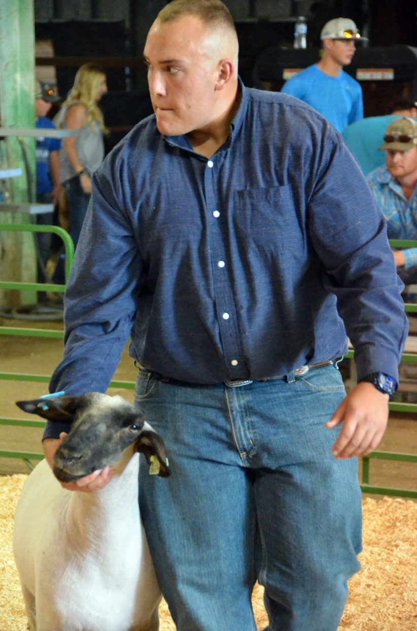Bryson Davis keeps a grip on his sheep  during the market class division of the Wednesday sheep show at the Moffat County Fair.