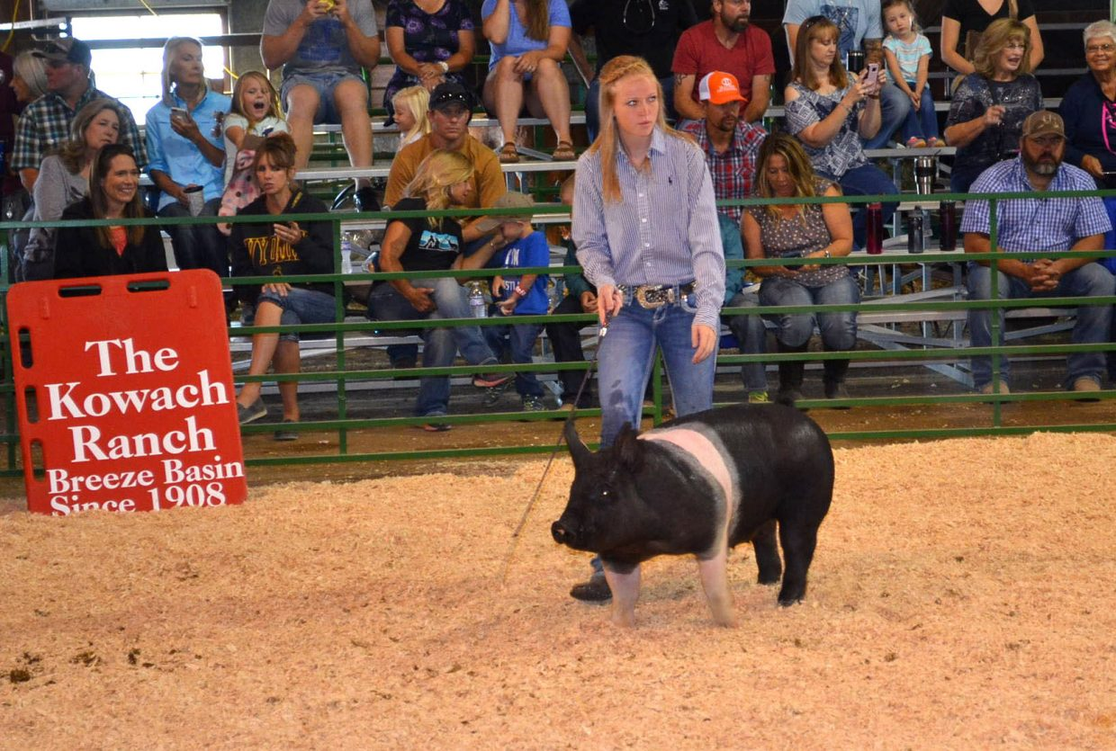 Reese Weber takes her pig through its paces during the swine show's senior showmanship division at the Moffat County Fair on Friday.
