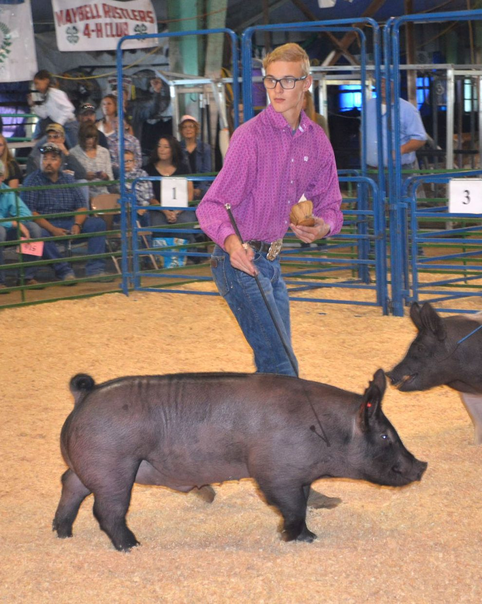 Kameron Baker guides his pig around the arena during the senior showmanship division of the swine show at the Moffat County Fair on Friday.