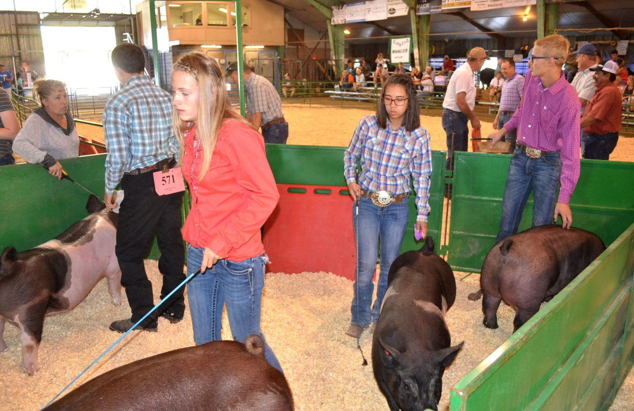 Participants in the senior showmanship division of the swine show prepare to enter the arena at the Moffat County Fair on Friday.