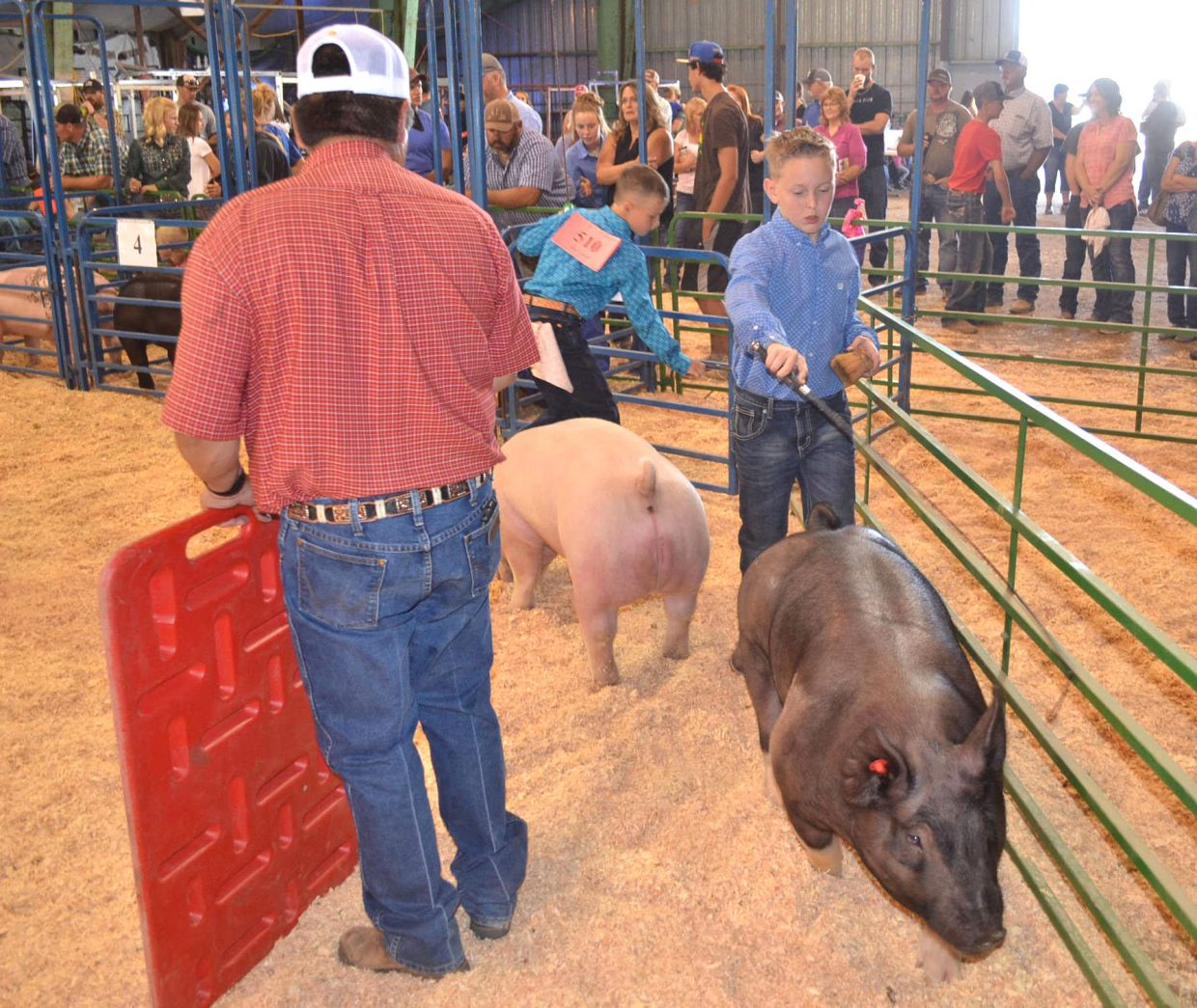 Klayton Baker maneuvers his swine around the ring during the junior showmanship division of the swine show at the Moffat County Fair on Friday.