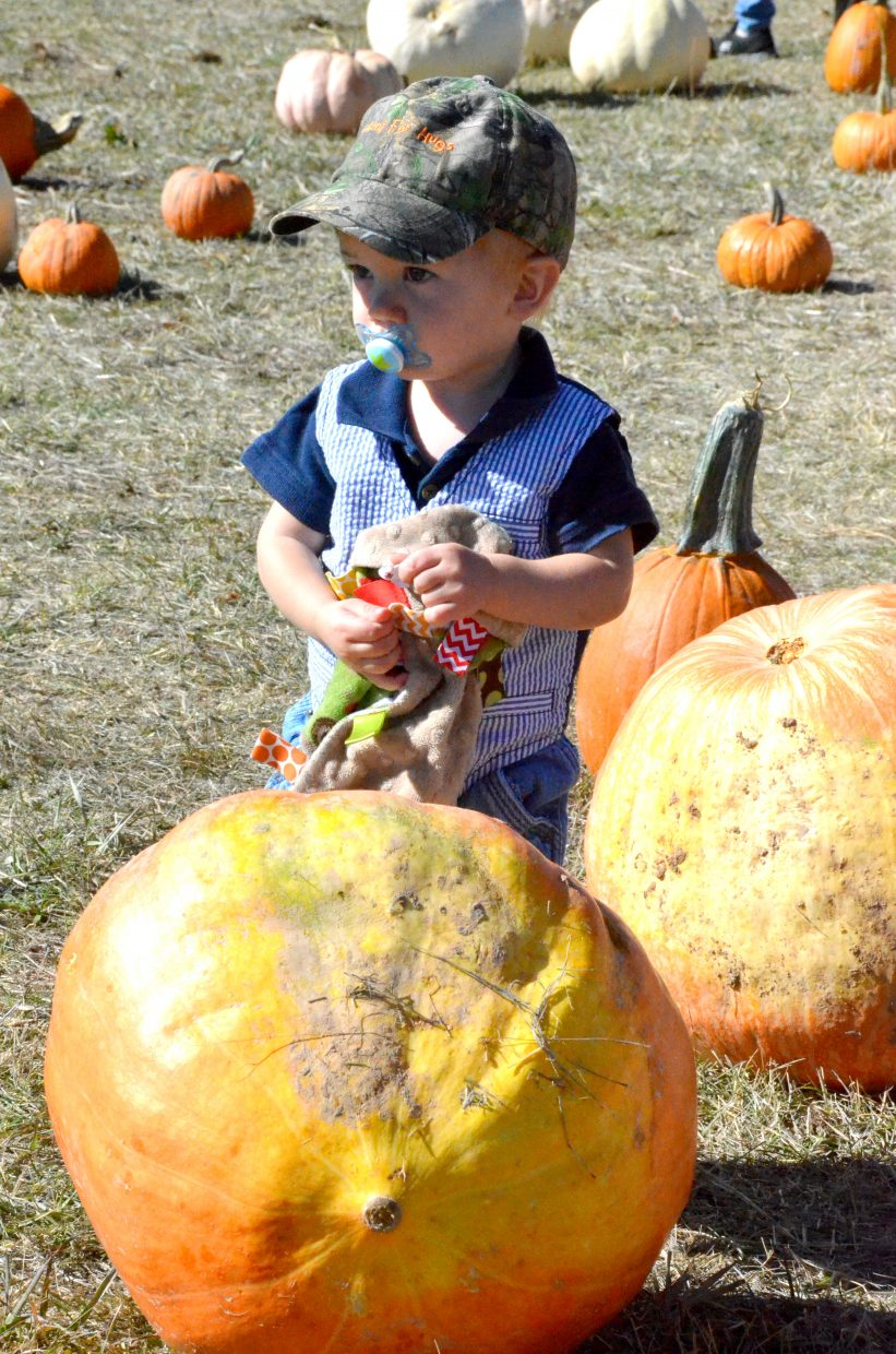 Kade Hergenreter, 1, is only a little taller than some of the bigger pumpkins at Saturday's pumpkin patch at Wyman Living History Museum.