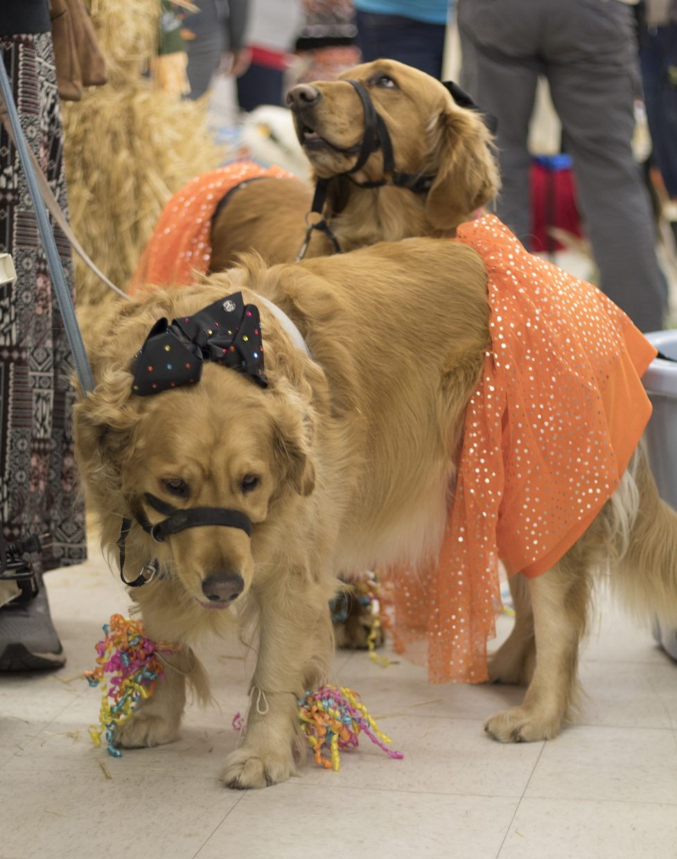 Sally and Rio show off their costumes Saturday at Murdoch's Ranch and Home Supply's annual Growl-O-Ween event, in which residents were invited to dress their furry friends — and themselves — in costume for the chance to win a $100 Murdoch's gift card. Sally and Rio are owned by Cathy Pearson.