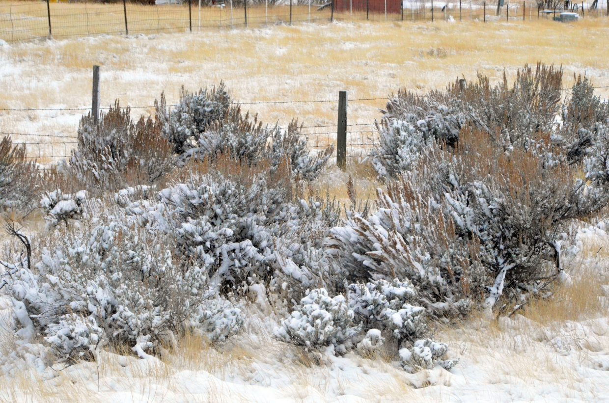 Roadside brush along US Highway 40 has a healthy dusting of snow Saturday afternoon.