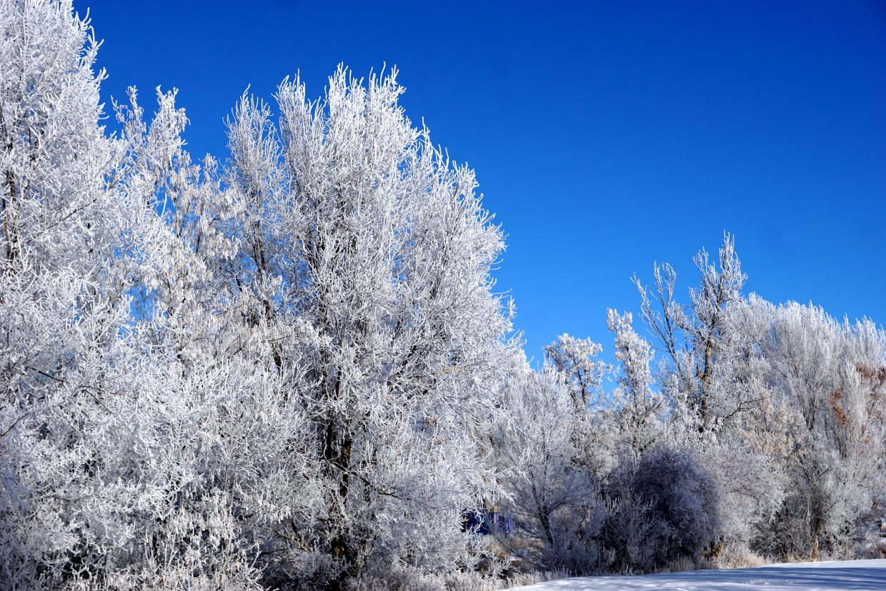 Deep blue skies contrast with frosty white trees at Craig City Park.