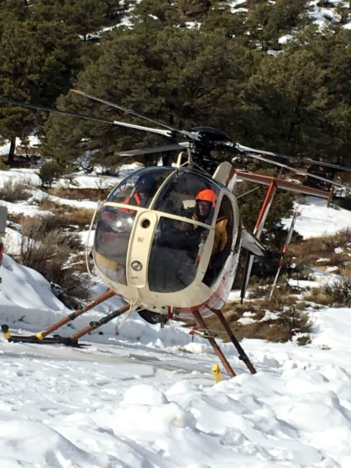 A helicopter was used to find and capture the deer.