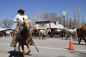 Hooves and heritage: Great American Horse Drive, Maybell Heritage Days big weekend draw for Moffat County