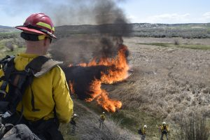 Species get new opportunity after BLM's Oxbow controlled burn in Moffat County
