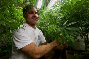 The 'hemp gold rush': A look at the Routt County businesses leading the charge