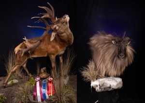 Craig taxidermist earns state-wide awards for mounts